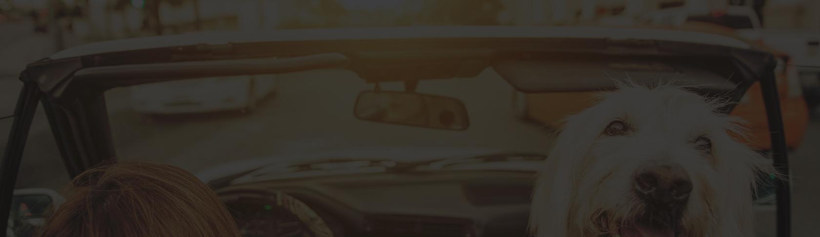 dog-car-banner.jpg
